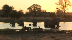 Pack of wild dogs at sunset with elephants drinking in the background Stock Footage