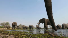 Spectacular low angle footage of elephants drinking at waterhole Stock Footage
