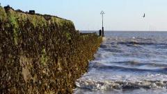 Long View of a Sea Barrier Covered in Seaweed Stock Footage