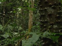 Jungles´s tree Stock Footage