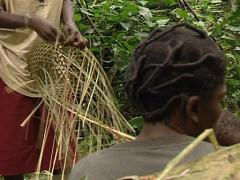 Pygmies making basket Stock Footage