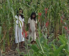 Two Lacandon men offspring of the Maya in a Milpa Stock Footage