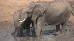 Slow motion of elephant family mud bathing - stock footage