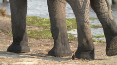 Slow motion of elephant legs walking away from camera - stock footage