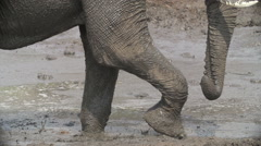 Slow motion of elephant legs walking through mud - stock footage