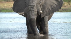 Slow motion of elephant bull standing in water and spraying water over himself - stock footage
