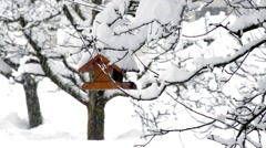 Snowy trees and bird houses Stock Footage