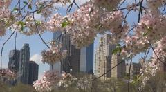Famous New York City Manhattan skyscraper building Cherry tree blossom flower US Stock Footage