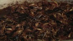 Cooking bugs Stock Footage