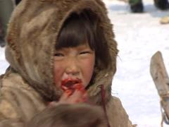 Nenet eating a raw reindeer Stock Footage