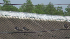 Group baby swallow bird relax electric wire wait food open beak famine hungry  Stock Footage