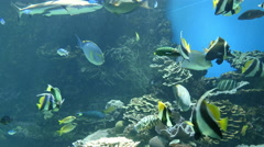 Aquarium lots of fish swimming 4k Stock Footage