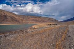Yaks in Tajikistan Stock Photos