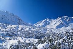 Idyllic winter Stock Photos