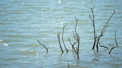 Branch submerged in a swamp or lake Stock Footage