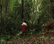Pygmies building a hut Stock Footage