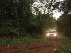 Car in the jungle Stock Footage
