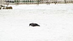 Cargo in Sultan Ahmet Square in Istanbul, Turkey. January 2015. Winter Season Stock Footage