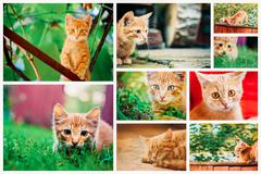 Peaceful Red Tabby Male Kitten Stock Photos