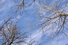 crown of trees with blue sky - stock photo