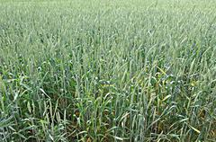 Plodinym agricultural crops Stock Photos