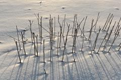 shadow of halm on snow covered field - stock photo