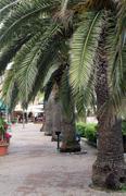 Italy, Elba, Porto Azzurro, seafront with palm trees Stock Photos