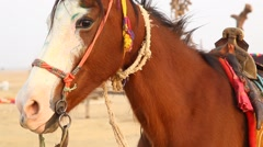 Horse eating food in the desert Stock Footage
