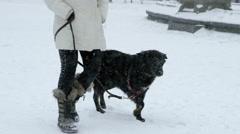 Black Dog Trotting Walking Walk Snow Blizzard Snowing Mut Eating Slow Motion 4K Stock Footage