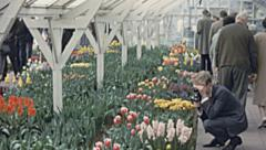 Holland 1963: people visiting a tulip garden Stock Footage