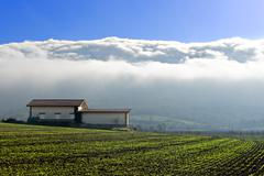 Stock Photo of farm with fog in Salvatierra