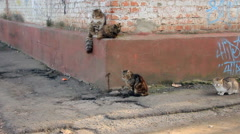Four cats on house corner Stock Footage