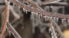 Frozen storm on plant Stock Footage
