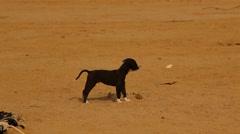Puppy Dog in Dessert Rural Area Stock Footage