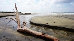tree trunk on a desolate beach - stock footage