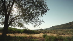 Time lapse of the sun moving through a tree in Sun Lakes Dry Falls Park Stock Footage