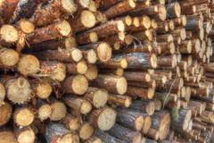 Freshly cut tree logs Stock Photos