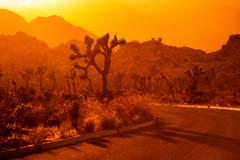 Joshua Tree National Park California Sunset Scenery Kuvituskuvat