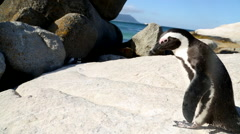 Jackass Penguin 3 Stock Footage