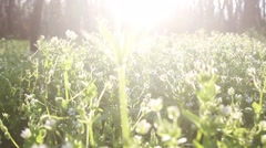 Sun rays On Green Grass Stock Footage