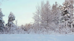 Winter forest with tree branches in snow, Karelia, Russia Stock Footage