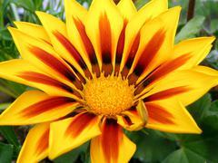 Flower detail - stock photo