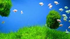 Fishes swimming around seaweed Stock Footage
