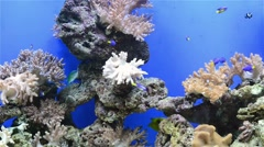 Tripical fishes and coral in aquarium Stock Footage