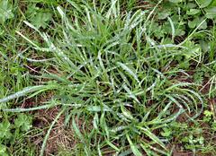 Dewy turf - stock photo