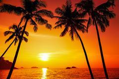 Sun between the palm trees Stock Photos