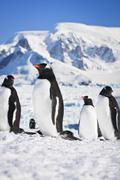 Penguins in Antarctica Stock Photos