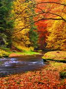 Autumn landscape, colorful leaves on trees, morning at river after rainy night.  Stock Photos