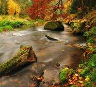 Autumn colors on banks at small rapid stream.  - stock photo