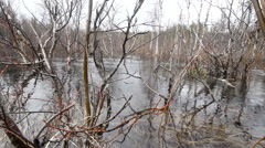 River flood in the spring.  in the forest. Stock Footage